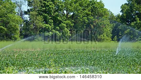 A photograph of fields and corn and asparagus being watered with a spray irrigation system