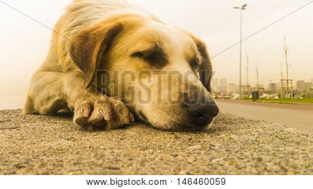 Stray Dog Sitting On The Pavement