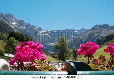 a view of Cirque de Gavarnie with flowers in the foreground