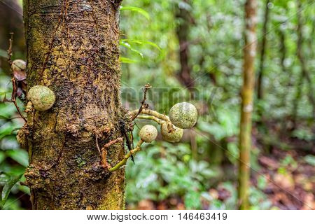 Fungus On A Tree Amazonian Rainforest Cuyabeno National Park Ecuador