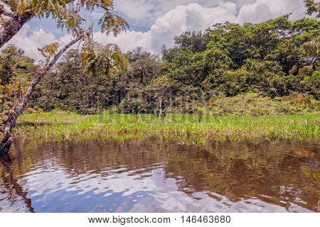 Cuyabeno River With His Dense Vegetation Located In Sucumbios Ecuador Cuyabeno Wildlife Reserve South America