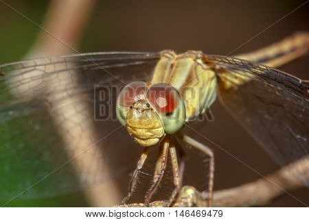 The Dragonfly on branch in nature, outdoor