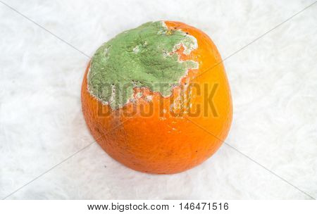 Moldy orange on a smooth white background