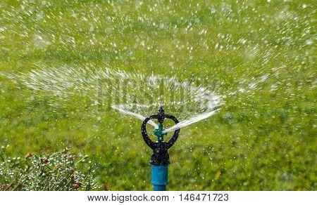 The Sprinkler watering in the flowers garden.