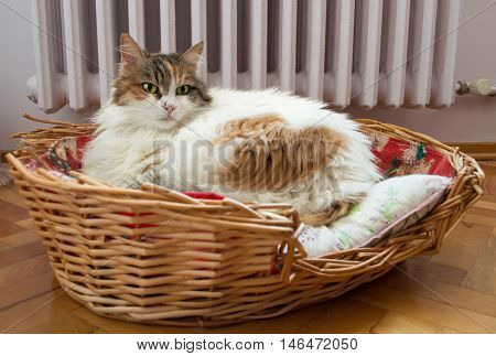 Cat laying in the basket with radiator background