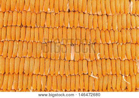 Corn backgroun, pile of corn, ripe corn, dried corn