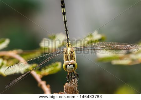 Dragonfly in the outdoors by beautiful natural