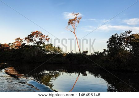 The Yacuma river. Bolivian jungle in Amazon.