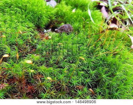 Closeup Background Of Fresh Green Moss Plants