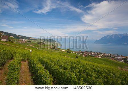 Evening on vineyards of the Lavaux region over lake Leman (lake of Geneva) Switzerland