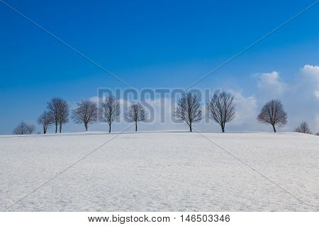 Winter landscape with trees under blue sky