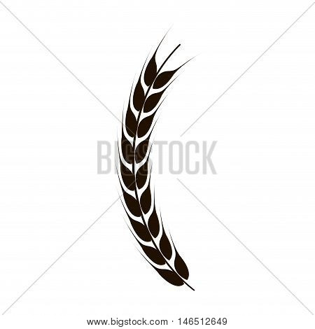 wheat branch cereal grain. agriculture harvest . vector illustration