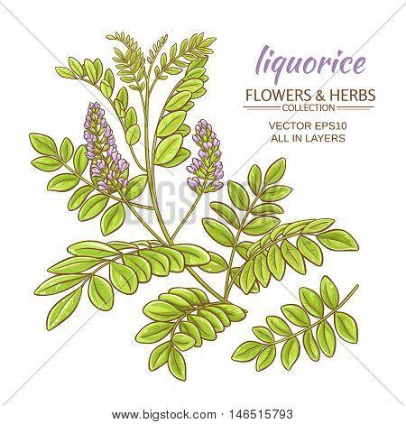 illustration with liquorise plant on white background