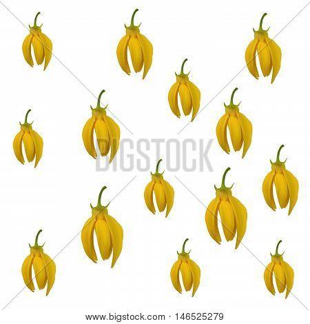 Ylang-ylang Flower Pattern On White