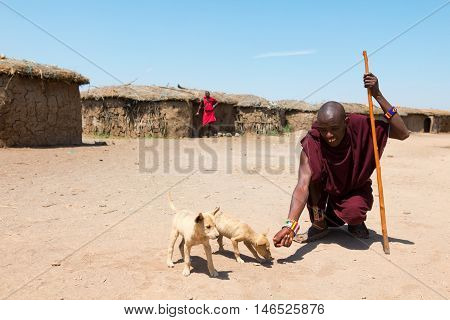 Amboseli Kenya - February 07 2012 - Masai man feeding dogs. Dressed in typical clothing in Masai village in Amboseli national park