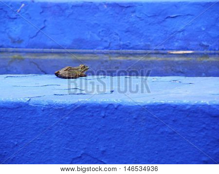 A Frog on a Bright Blue and Light Blue Wall, Background