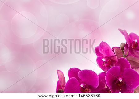 Magenta blossom orchid at lower right of light blurred pink background. Phalaenopsis flower.