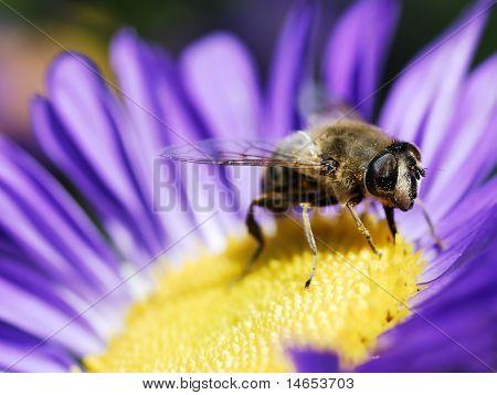Fly on blue flower
