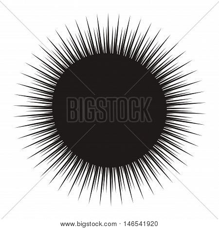 Black sea urchin arbacia lixula aquatic natural food. Wild animal raw food fresh sea urchin marine underwater. Water aquatic spiny sea urchin wildlife creature shell tropical exotic vector sharp. poster
