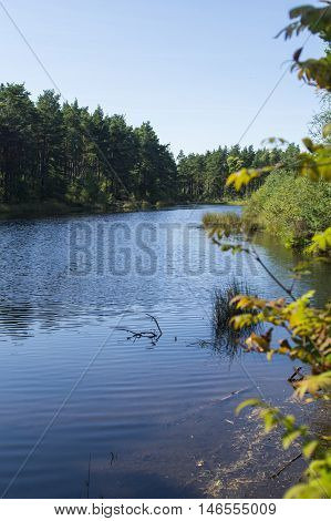 stagnant water in Devilla Forest in Fife