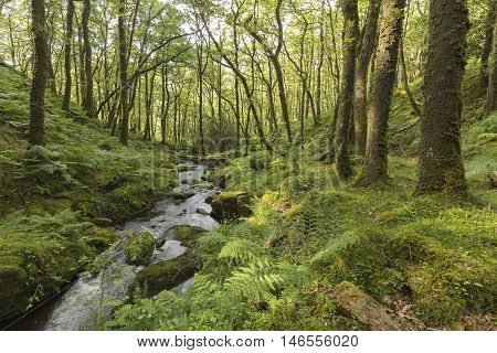 An image of a beautiful woodland setting where Venford Brook flows through Dartmoor woodland, Devon, England, UK.