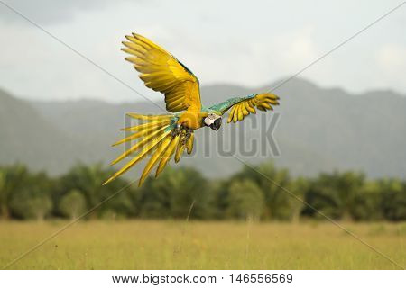 Motion blur Parrots flying in the sky evening.