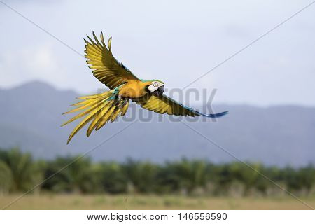 Parrots flying in the sky. in the evening.