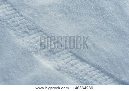 Fatbike (also called fat bike or fat-tire bike) - Cycling on large wheels. Traces of wide tires in the snow.