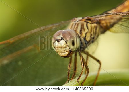 The Dragonfly in the outdoors by natural.