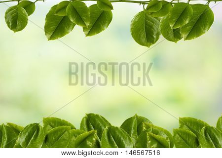 background tree, branch tree, green, Leaves, tree, tree green, twig,limb