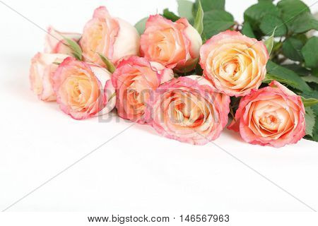 Peach and coral roses isolated on white background