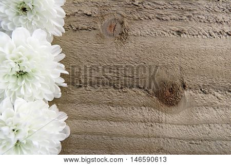 A border of white flowers on a wooden border with space for text