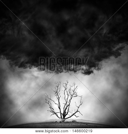 die tree - concept picture of bad enviroment in black and white tone
