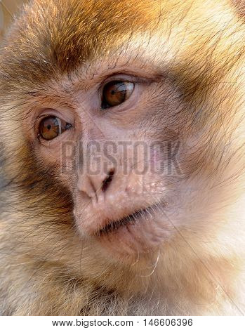 monkey beautiful strong wild forest smile character advertising bank card baner