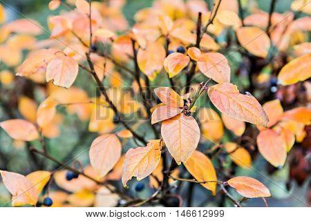 Red And Orange Leaves In The Autumn Background Bush