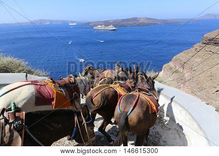 Donkeys on the climb from the harbor in FiraSantorini Greece