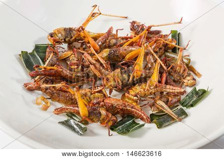 Insect fried, Steet food in Thailand, rich of protein