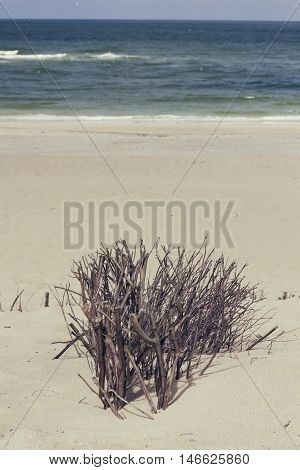Dune grasses at the seashore black and withe