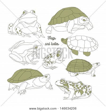 Set with frogs and turtless. Hand drawn vector illustration, EPS 10