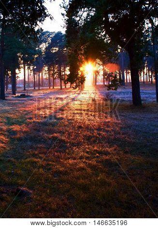Sunset, evening, nightfall, dusk, twilight, forest, trees