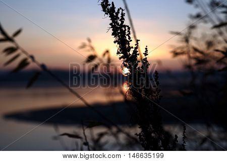 Pond, river, sunset, reed, cane, evening, nightfall, dusk, twilight