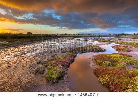 Salicornia Estuary Sunrise