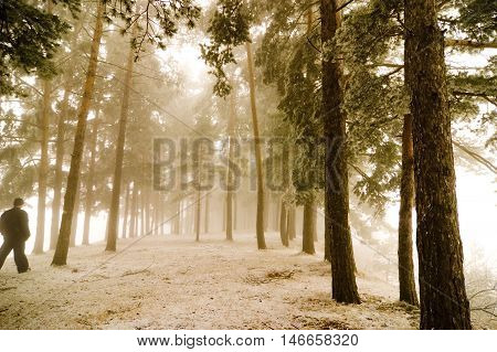 Perspective of misty forest with man walking by