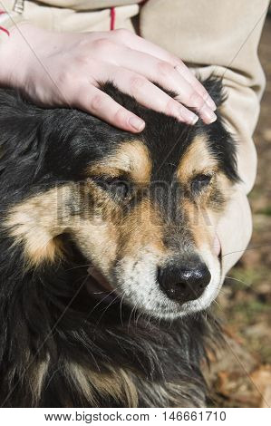 A close up view of a friendly dog having its head rubbed and petted.