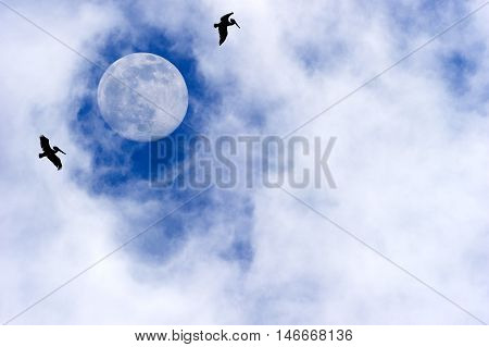 Moon birds are tow silhouetted birds flying by a bright full moon with wispy clouds in a deep blue sky.