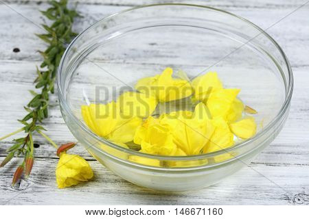 Making Bach flower remedies Oenothera biennis evening star natural method of healing