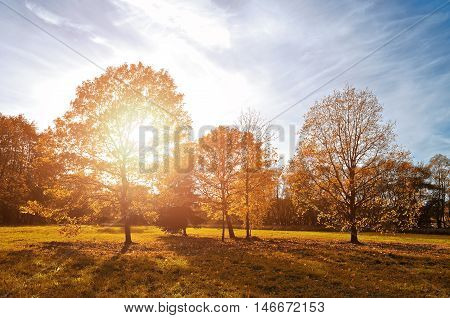 Autumn landscape with autumn trees in the park. Autumn nature -yellowed autumn park in autumn sunny weather. Picturesque autumn view of autumn park. Soft focus applied. Autumn nature in sunlight poster