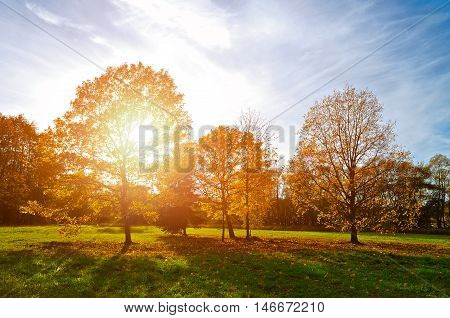 Autumn landscape with autumn park at sunset. Autumn nature -yellowed autumn park in autumn sunny evening. Colorful autumn view of autumn sunset park under sunshine. Autumn nature in sunset light