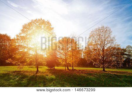 Sunset autumn view of autumn park lit by sinlight. Autumn nature landscape-yellowed autumn park in autumn sunny weather. Picturesque autumn view of autumn park. Autumn nature in sunlight