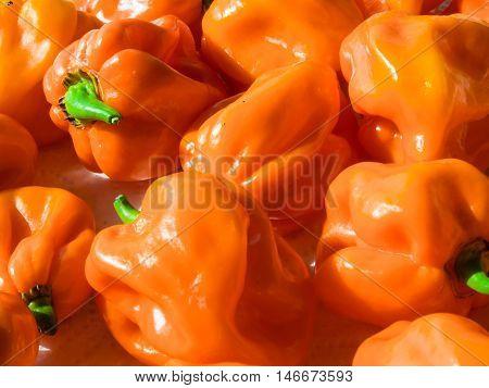 Closeup Of Fresh Chillies Habanero Orange